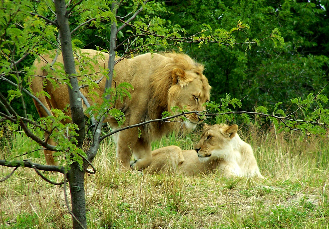 Love in Nature by Joe-Maccer
