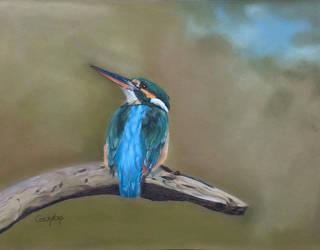 Kingfisher by dierenpastels