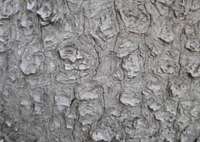 Tree Bark Texture by powerpuffjazz