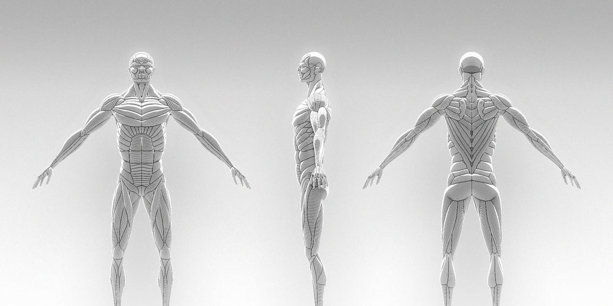 Anatomy Practice by soongpa