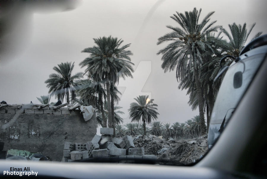 Iraq's Great Palm by Einas-A