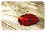 autumn magick