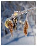 winter impression iii