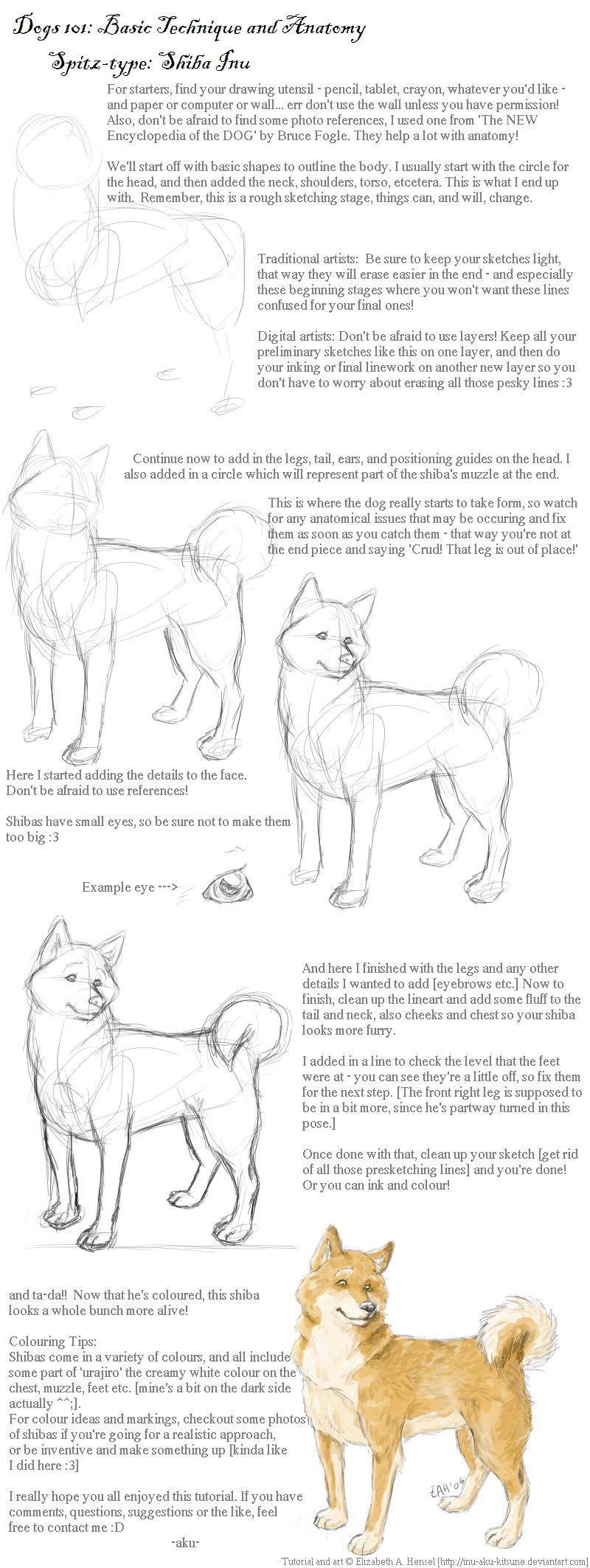 Dogs 101: Shiba Inu by inu-aku-kitsune on DeviantArt