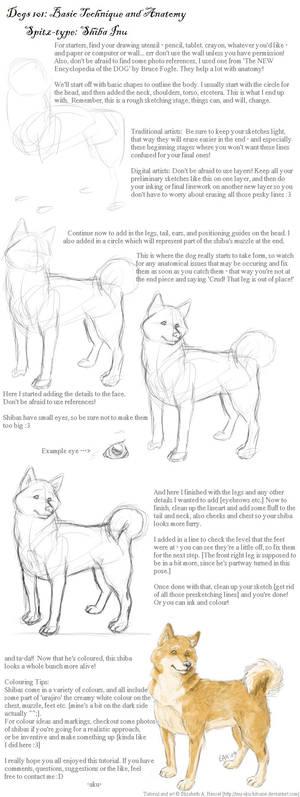 Dogs 101: Shiba Inu