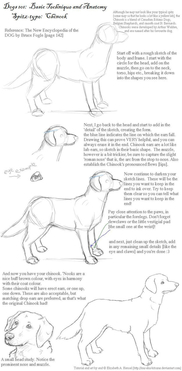 Dogs 101: Chinook by inu-aku-kitsune on DeviantArt