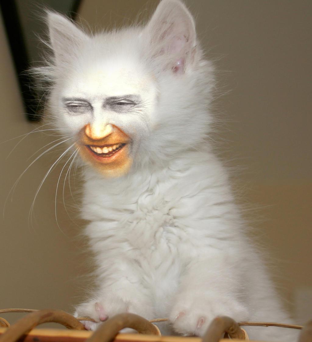 Christopher Walken Cats 2 by myownasylum on DeviantArt: myownasylum.deviantart.com/art/christopher-walken-cats-2-144895852