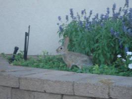 Rabbit stock 4