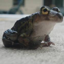 Happy frog 2 by AshenSorrow