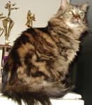 Cat Stock 4