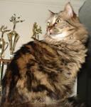 Cat Stock 5