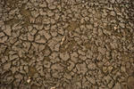 Cracked earth Texture 2