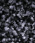 Leaf Texture 1
