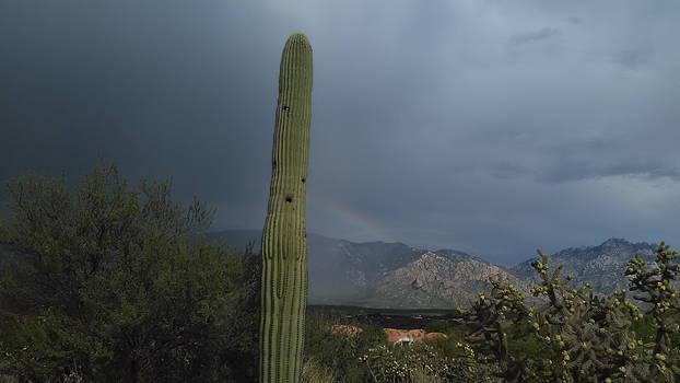 Tucson AZ Stock 46