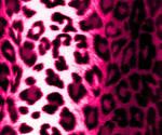 AshenSorrowStock-Leopard5