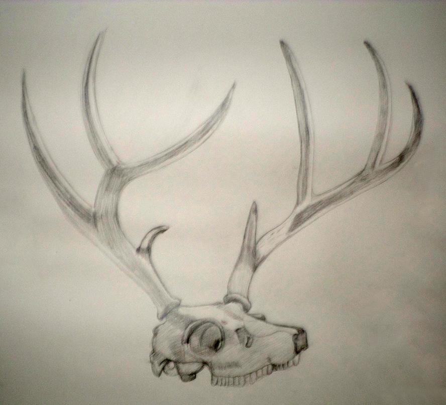 Still Life: Deer Skull by Cpr-Covet