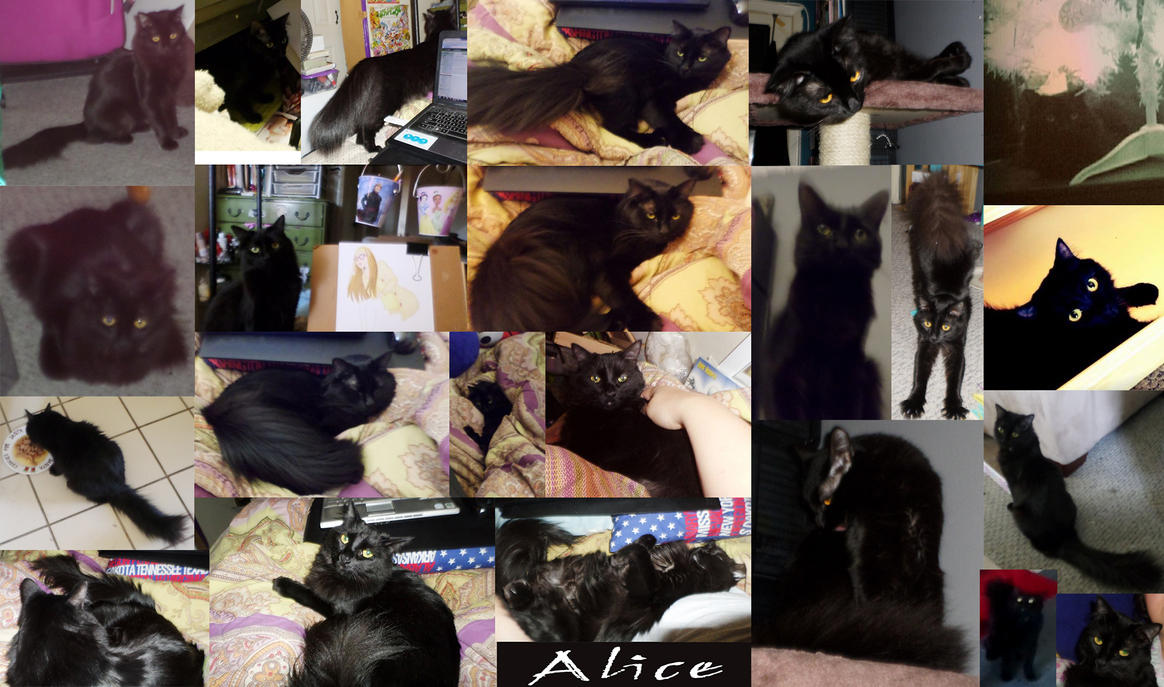 Alice Collage by Cpr-Covet