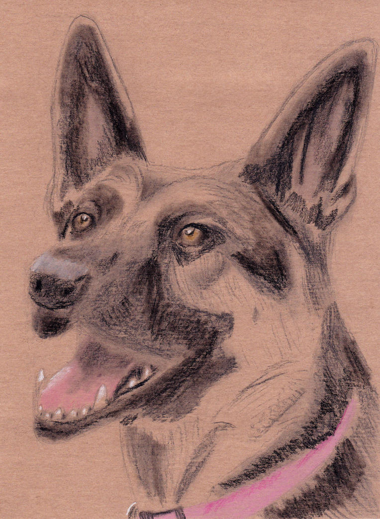 Liza the giant german shepard by Cpr-Covet