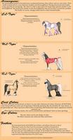 Acineequine Breed Sheet: NEW by Utakame