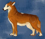 wolf-speedpaint