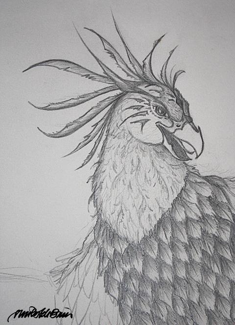 Phoenix Bird Head Drawings | www.imgkid.com - The Image ...