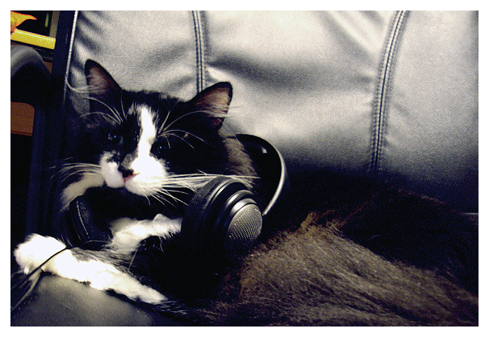 Rock_n___Roll_Cat_by_Black_Forty_Four.png