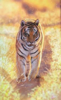 Tigre caminando al atardecer