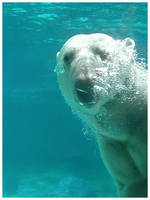 Polar Bear by eosthilas