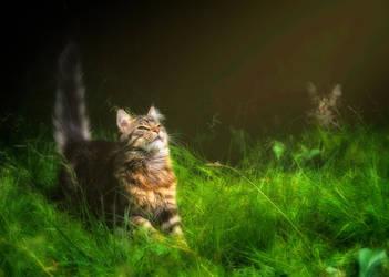 Enjoy the Sunshine by Manu34