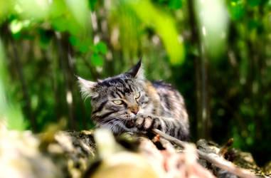 Survival in Jungle