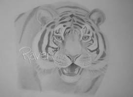 Tiger by LittleMissRaven