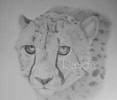 Gepard - done by LittleMissRaven