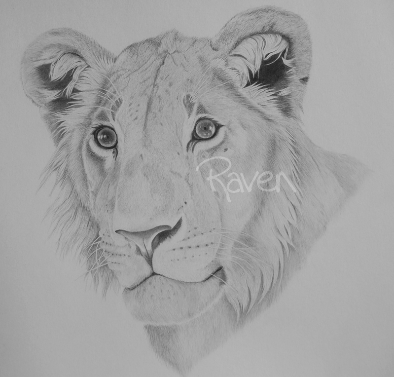 Lion by LittleMissRaven