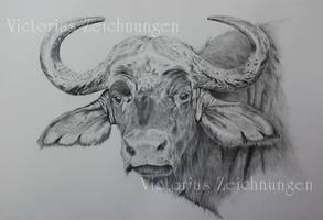 African buffalo - finished by LittleMissRaven