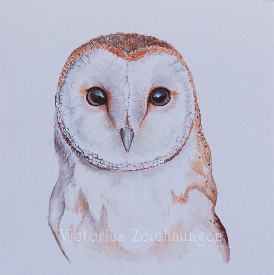 Barn Owl In Watercolor By Littlemissraven On Deviantart Really Owl Drawings With Color