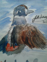 Harlequin Duck - Request by JEAikman