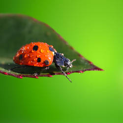 Lady Bug by Glart