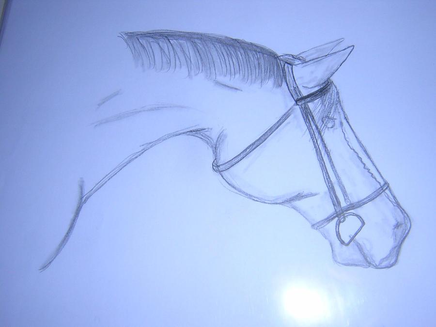 Horse... by strainam