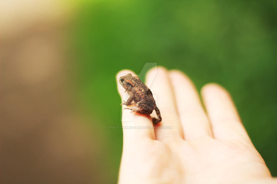 Cute little toad by TheLittleWhiteBird