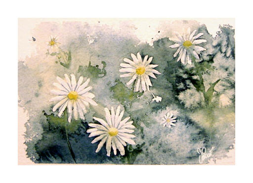 Daisies by Jackin