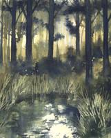 Sunlit Pond by Jackin