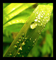 Water drops by Kikaku