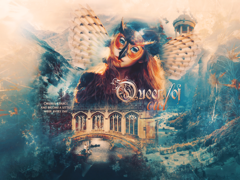 A flock of birds ~ 28.02 Queen_of_owl_by_dairegraphique-d85ljuy