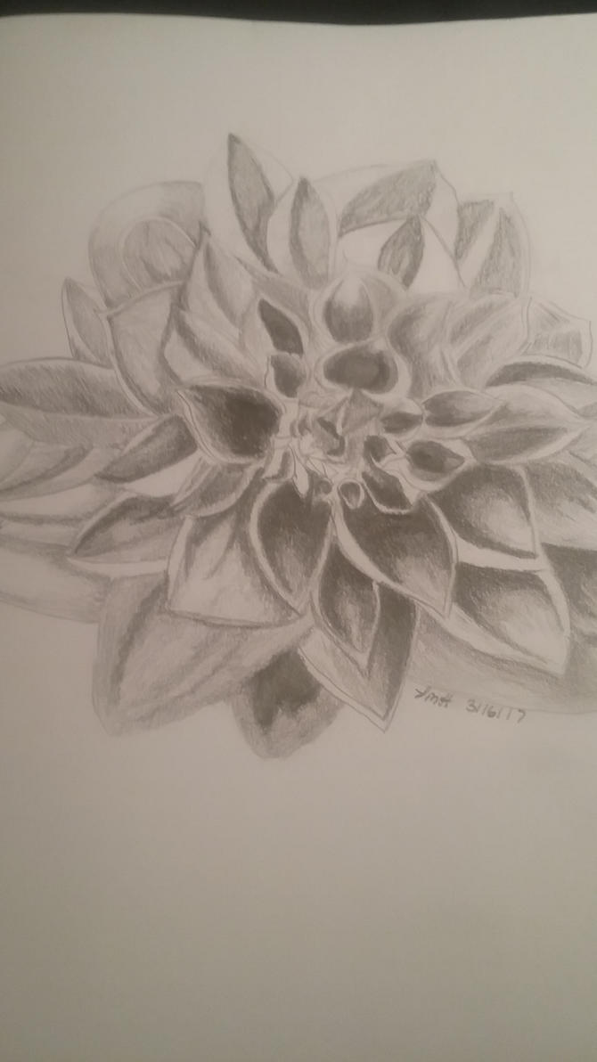 flower sketch by lisahuffman2001