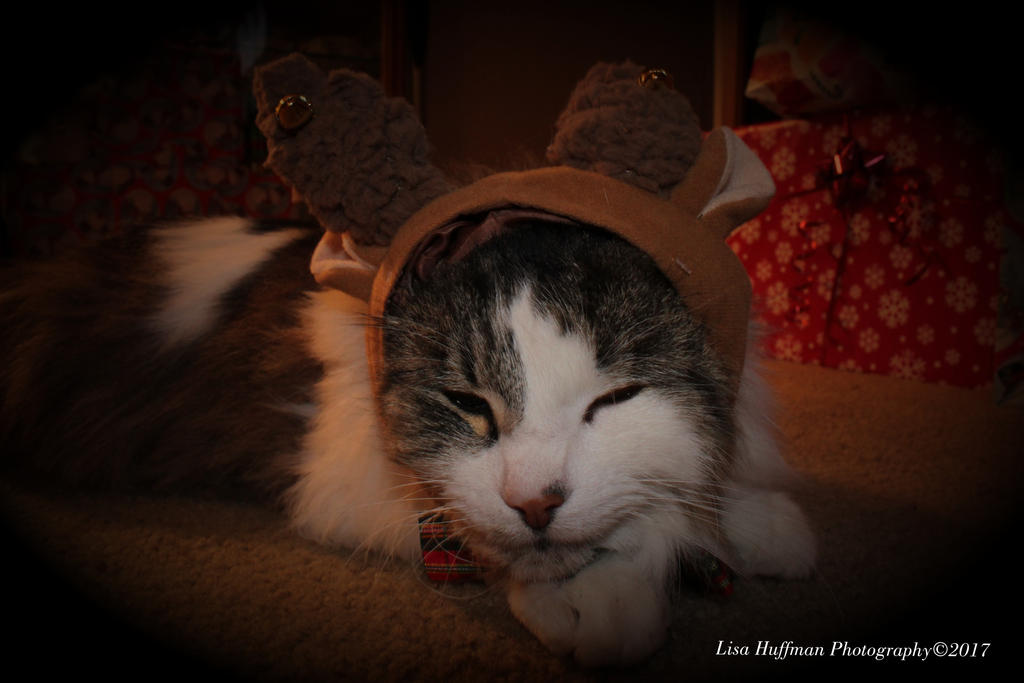 Queeny the reindeer by lisahuffman2001