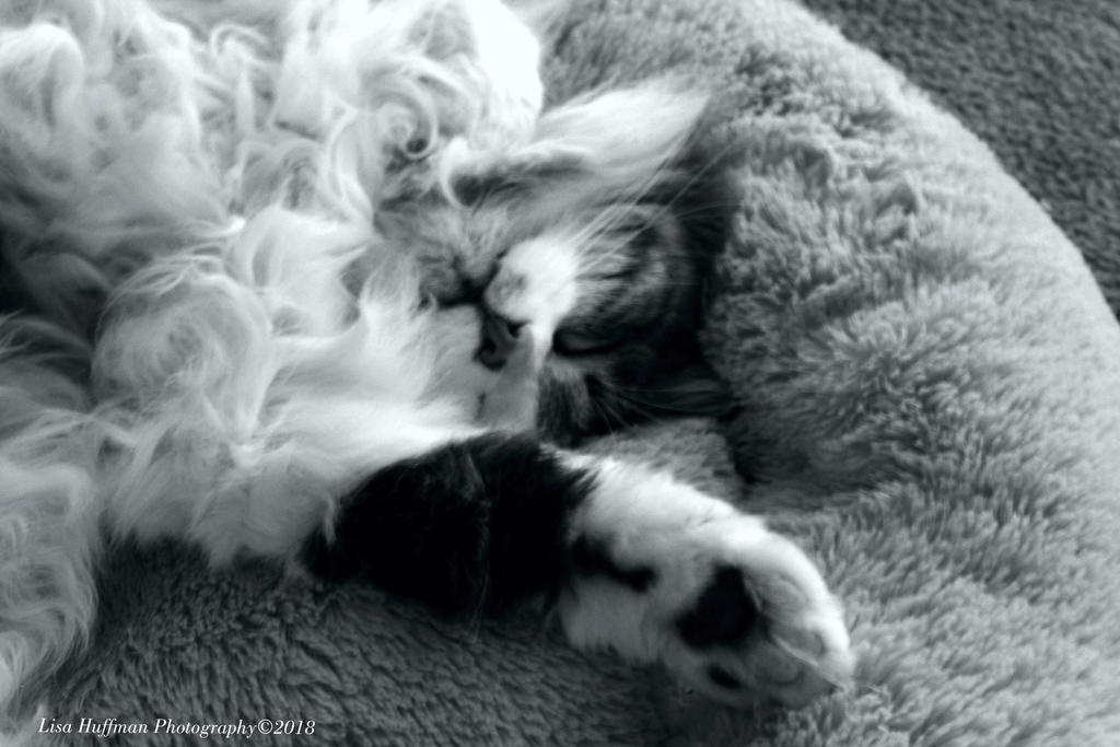 To much fur dont care by lisahuffman2001