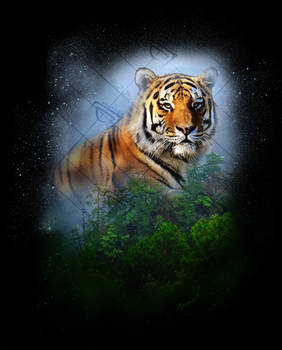 Tiger in tropical mountain forest