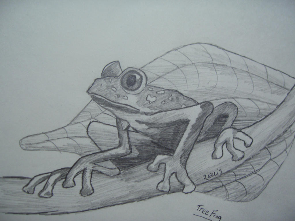 Realistic Tree Frog Drawings Tree frog drawing   1024