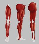 Legs 360