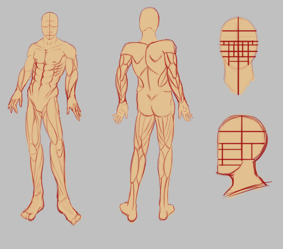 Male Body Pose And Reference Sheet Update By Spork On Deviantart